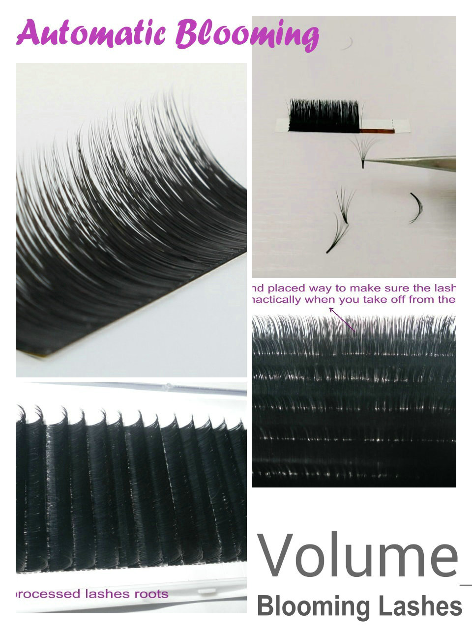 Blooming lashes(easy fanning)